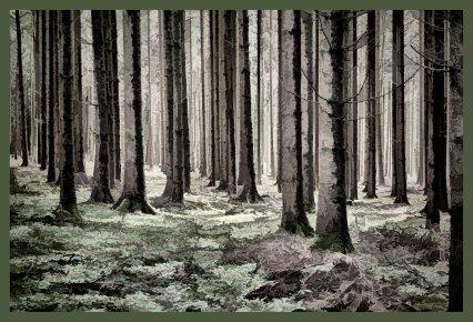 SULZ/LU 02. JANUAR 2015 - FEATURES SULZER WALD: Sulzer Wald auf dem Lindenberg vor dem grossen Schneefall.