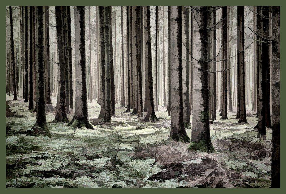Sulzer Wald vor dem grossenSchneefall