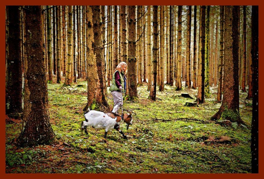 Waldspaziergang mit Zwerggeiss