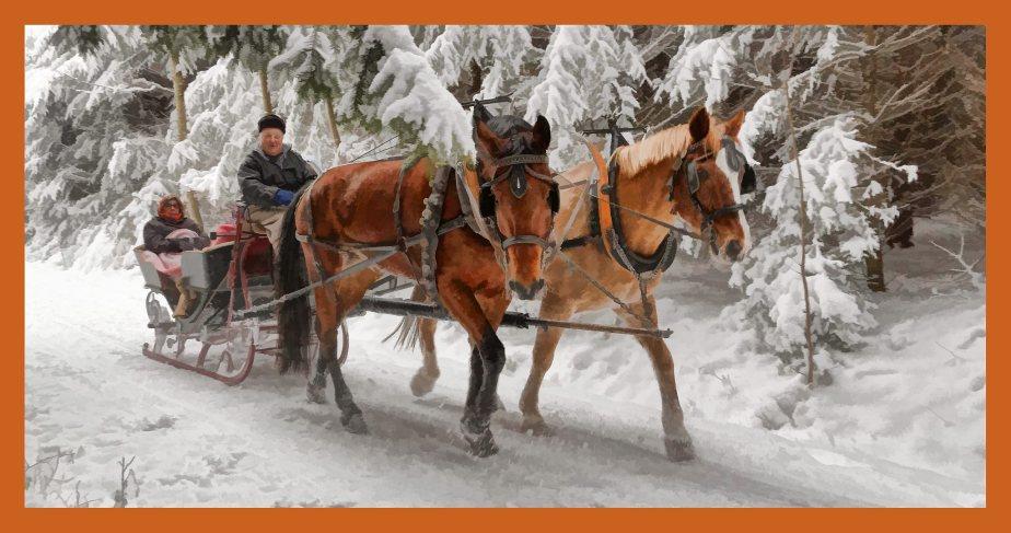 Spaziergang im tief verschneiten Sulzer Wald auf dem Lindenberg. Pferdeschlitten unterwegs.
