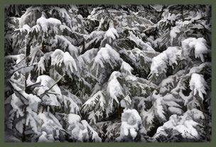 SULZ/LU 19. JANUAR 2015 - PFERDEKUTSCHE IM VERSCHNEITEN SULZER WALD: Pferdeschlitten im tief verschneiten Sulzer Wald auf dem Lindenberg. Pferdeschlitten unterwegs.