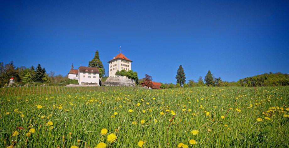 Blühende Apfelbäume einer Obstplantage in Gelfingen und Schloss Heidegg in der paradiesischen Blütezeit.