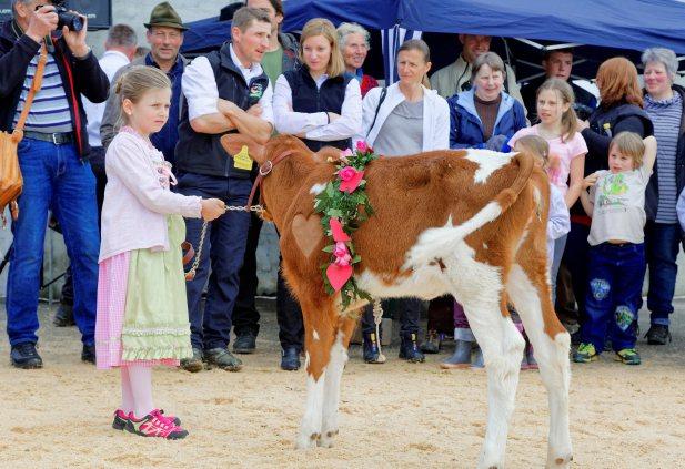 Impressionen Jubiläumsschau 125 Jahre Fleckviehzuchtverein Eichberg auf dem Areal der Landwirtschaftschule BBZN Hohenrain.