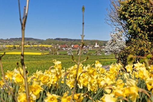 Blick auf Kleinwangen mitten in der Fruehlingsbluete. Foto zu Projekt Sehtal (Luzerner Seetal).
