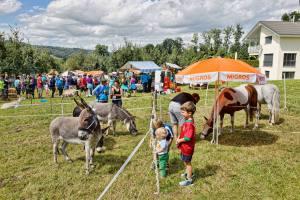 Esel und Pferde in Altwis (Photo by: www.studhalter.org)