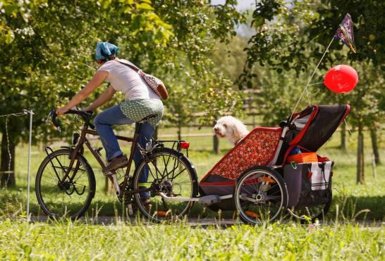 Glückliches Hundeleben... (Photo by: www.studhalter.org)