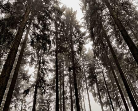 Nebelschwaden schleichen durch den Wald