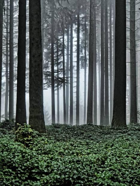 Licht durchdringt den Nebel