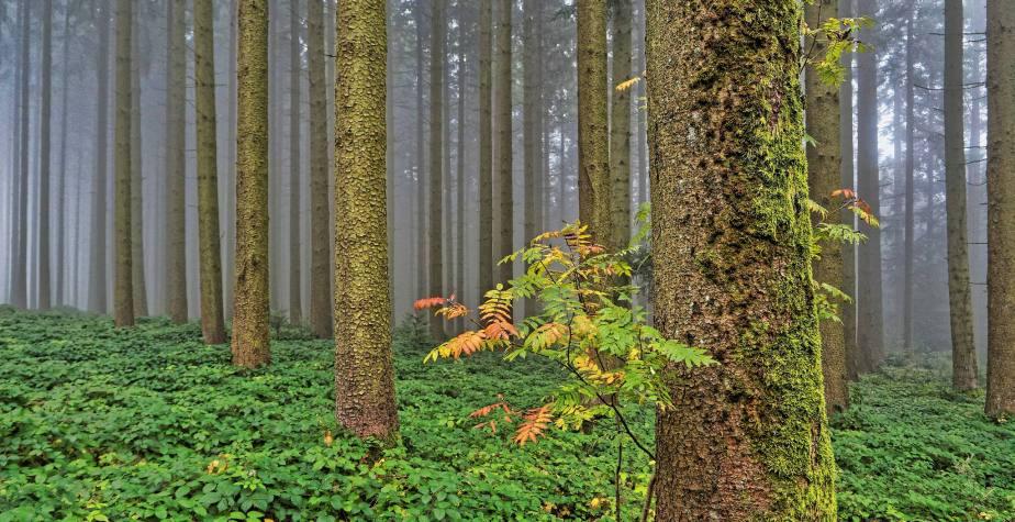 Herbst im Sulzer Wald