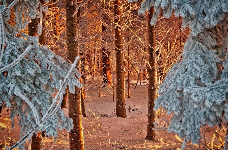 Hilfe – der Waldbrennt!