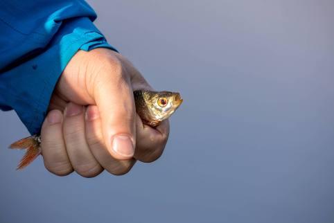 Der letzte Kiemenzug des allerersten Fischleins...