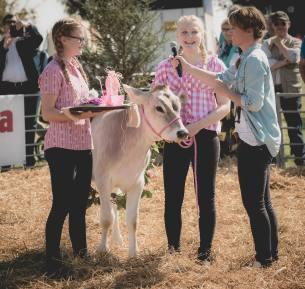 Das Siegertrio in Pink: Impressionen vom Kälberwettbewerb HORBA 2017 Aargauer kantonale Braunviehausstellung auf dem Horben bei Beinwil/Freiamt.