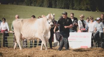 Impressionen HORBA 2017 Aargauer kantonale Braunviehausstellung auf dem Horben bei Beinwil/Freiamt.