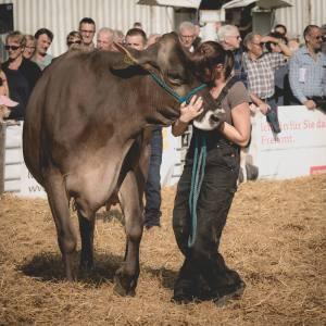 Siegerkuss für Petunia - Miss Genetik UND Miss HORBA: Impressionen HORBA 2017 Aargauer kantonale Braunviehausstellung auf dem Horben bei Beinwil/Freiamt.