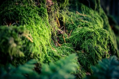 SULZ/LU 07. OKTOBER 2017 - SERIE SEHTAL.COM BLOG: Impressionen Herbst im Sulzer Wald. Ein Herbst der unzaehligen Pilze. Fotos zu Projekt Sehtal (Luzerner Seetal). ths/Photo by: THOMI STUDHALTER, PHOTOS&MORE, www.studhalter.org