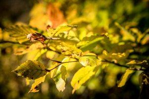 SULZ/LU 13. OKTOBER 2017 - SERIE SEHTAL.COM BLOG: Impressionen Herbst im Sulzer Wald. Fotos zu Projekt Sehtal (Luzerner Seetal). ths/Photo by: THOMI STUDHALTER, PHOTOS&MORE, www.studhalter.org
