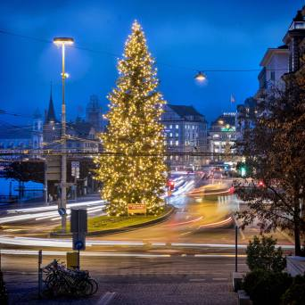 Wie ein Fels in der Brandung: Christbaum am Schweizerhofquai