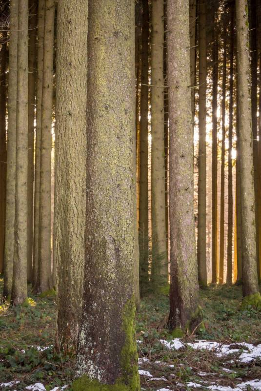 Sulzer Wald