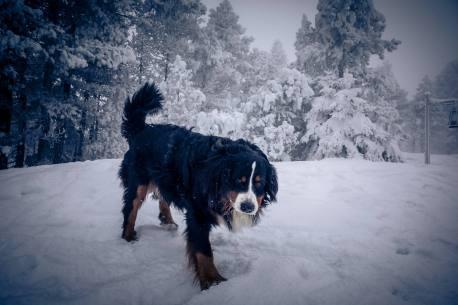 Balou geniesst die winterliche Idylle im tiefverschneiten und saukalten (-9Grad) Schwendi-Kaltbad Glaubenberg/OW.