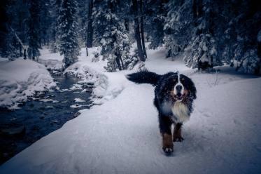 Balou unterwegs im tiefverschneiten und saukalten (-9Grad) Schwendi-Kaltbad Glaubenberg/OW.