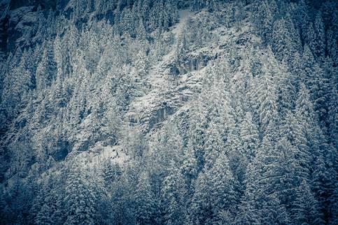 Verzuckerter Wald oberhalb Engelberg